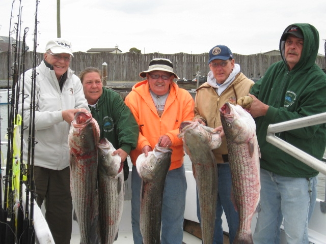 Trophy Striped Bass Caught On The Chesapeake Bay!