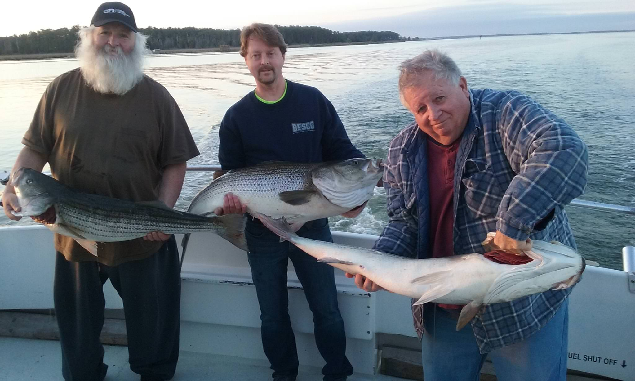 Three BIG Chesapeake Bay Rockfish!