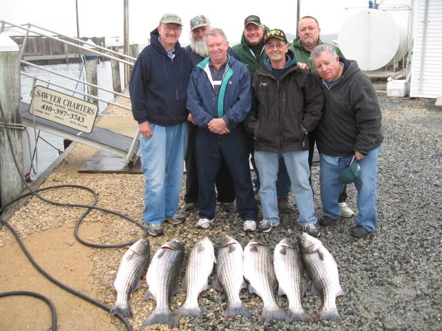 Another Legal Limit Of Chesapeake Bay Striped Bass! Sawyer Chesapeake Bay Fishing Charters