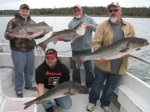 Four BIG Chesapeake Bay Rockfish From Maryland's Eastern Shore!