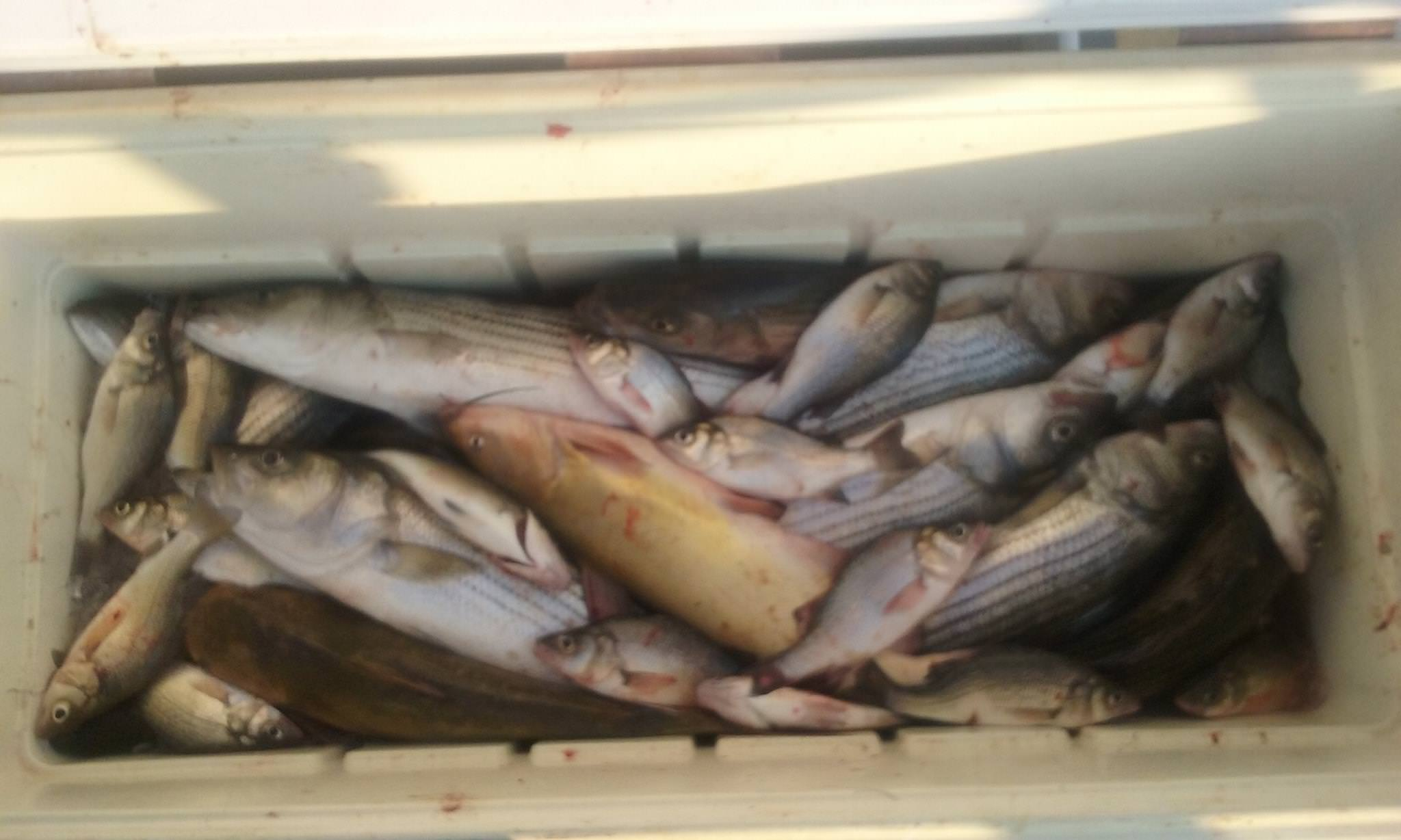 A Wide Variety of Fish on the Chesapeake Bay!