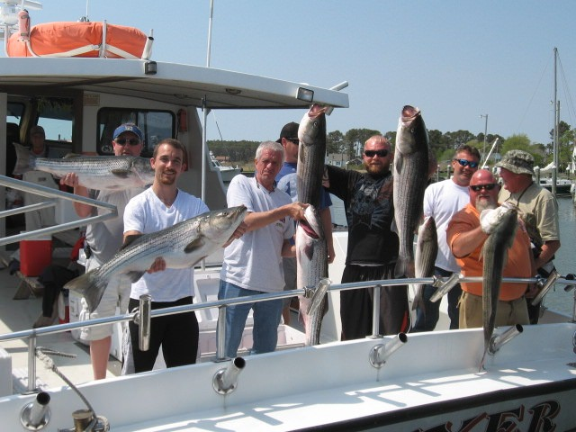 Trophy Rockfish Caught On Maryland's Chesapeake Bay!