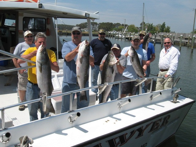 Fishing Charters On The Chesapeake Bay For Rockfish!